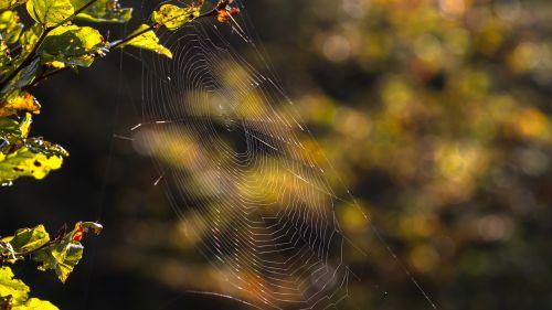 cobweb network lichtspiel