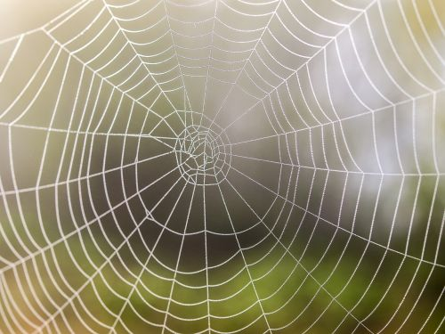 cobweb nature spider