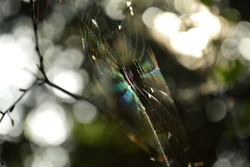 cobweb the rays sun