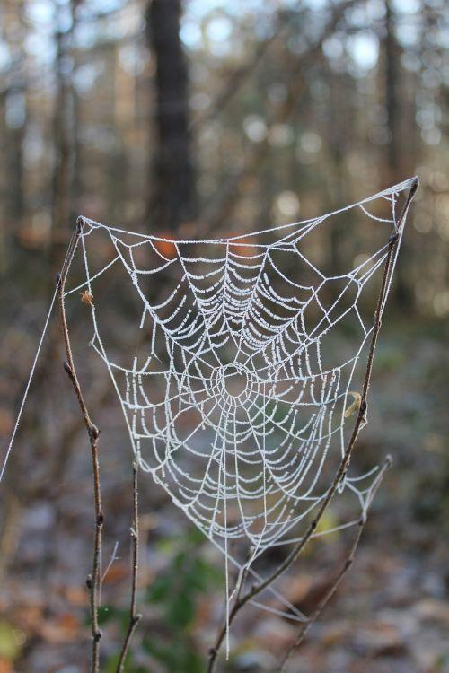 cobweb gefrohren winter