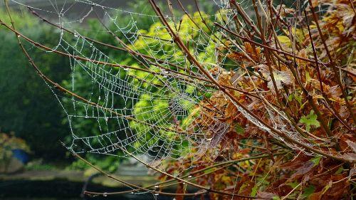 cobweb autumn network