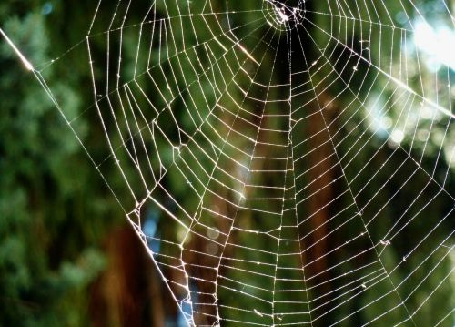 cobweb cobwebs protein