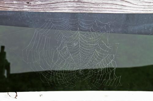 cobweb network autumn