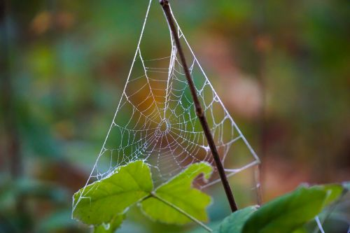 cobweb dew autumn