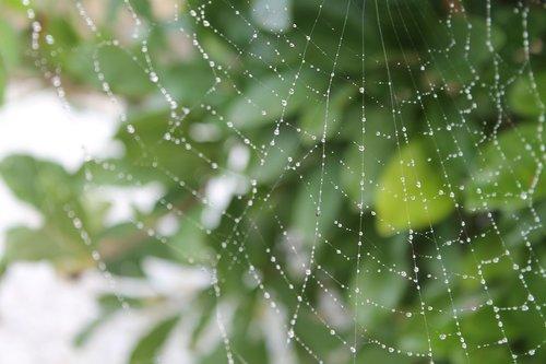 cobweb  dew  autumn