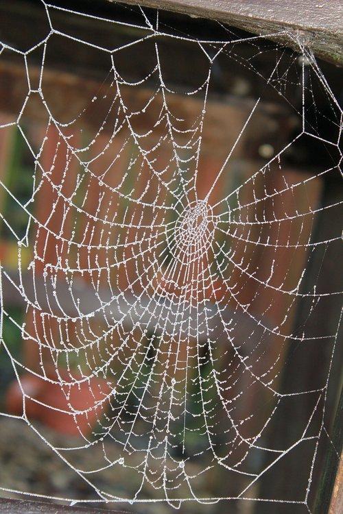 cobweb  frost  glisten