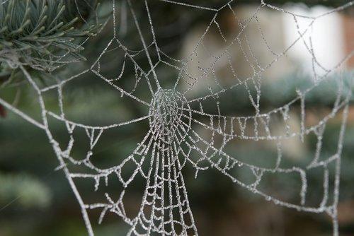 cobweb  hoarfrost  drip