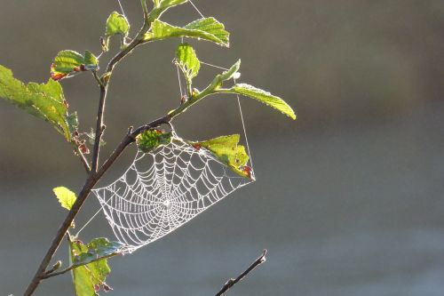 cobweb tender back light