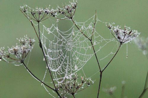 cobweb dew nature