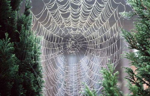 cobweb dewdrop morgentau
