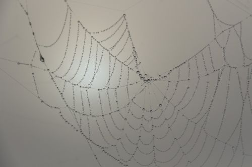 cobweb beaded morgentau