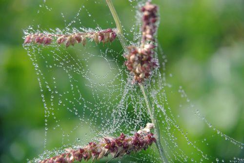 cobwebs drip macro