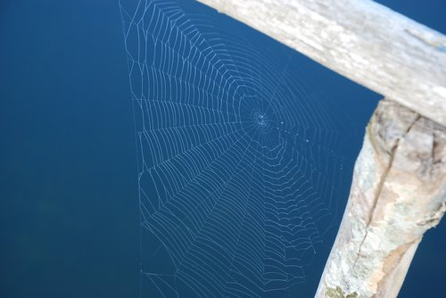 cobwebs  bridge  water