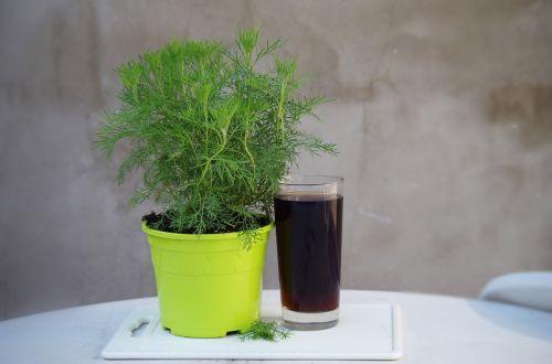 coca-cola cola bylinka plant