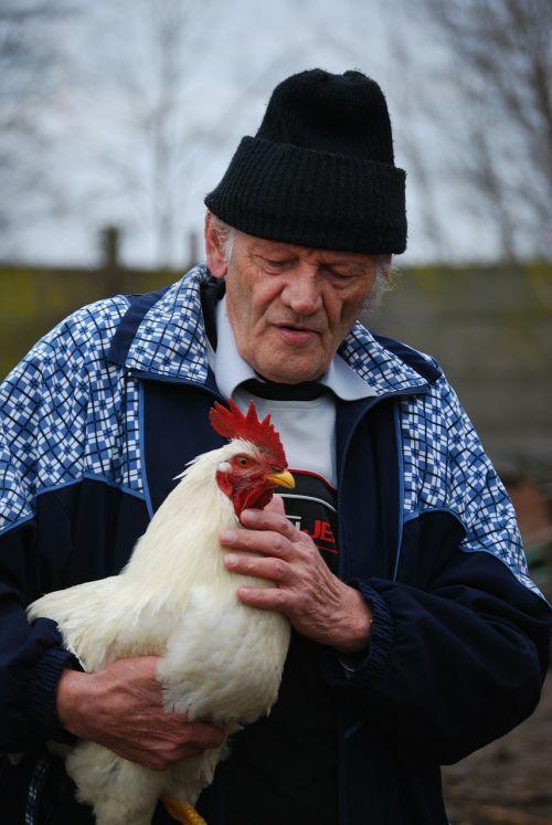 cock pets gentle