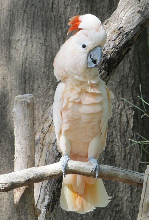 cockatoo bird exotic