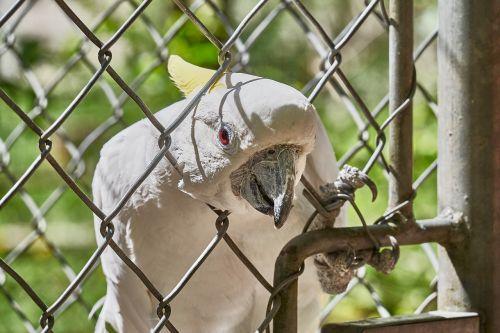 cockatoo grid bird
