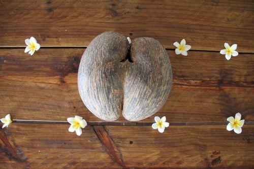 coco de mer coconut seychelles