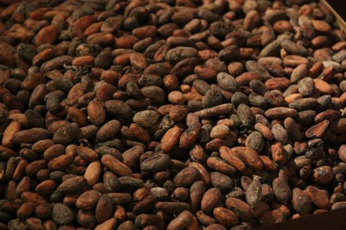 cocoa bean roast