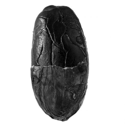 cocoa chocolate seed