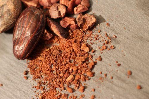 cocoa cacao chocolate