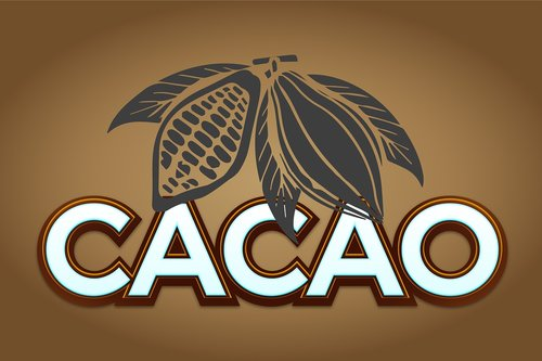 cocoa  fruit  chocolate