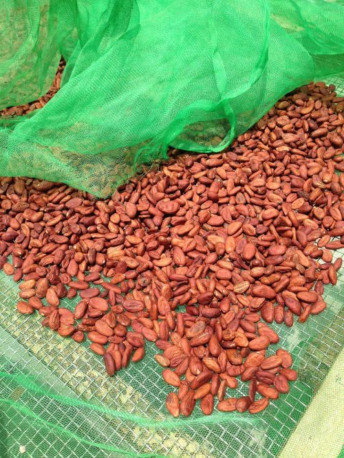 cocoa beans chocolate food