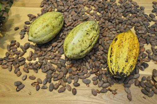 cocoa beans cocoa display