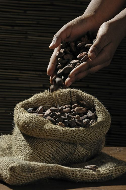 cocoa beans cocoa cacao