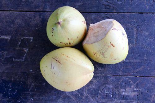 coconut seychelles coconut tree