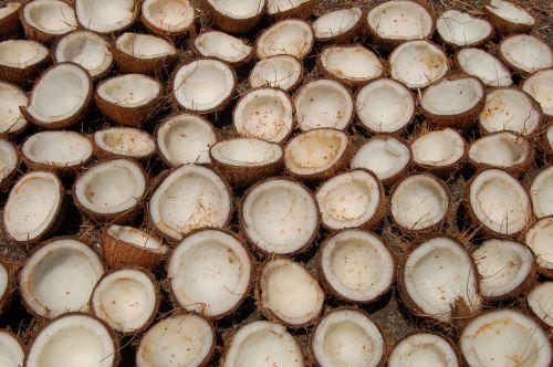 coconut india still life