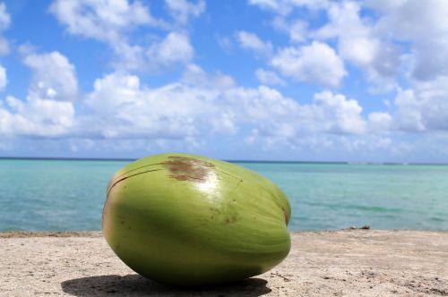 coconut guam sky