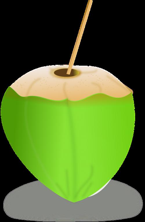 kokoso,kokoso pienas,kokoso,gerti,šiaudai,supjaustyti,atidarytas,gėrimas,vaisiai,nemokama vektorinė grafika