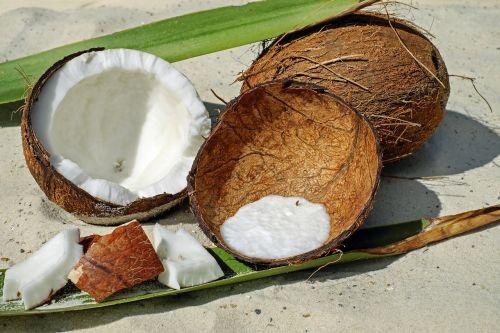 coconut nut shell