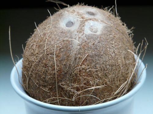 kokoso,gemalo skylės,kokosai,egzotiškas,saldus,delnas,Viduržemio jūros,maistas,drupe,skanus,valgyti,kokoso pluoštai,kokoso lukštas,akmens dubuo