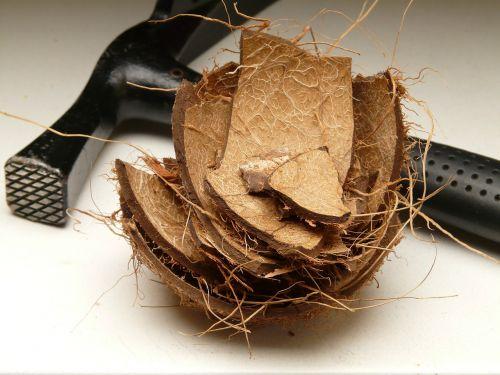 coconut shell coconut shell