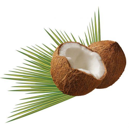 coconut leaf green