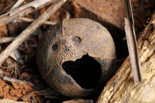 coconut shell funny face funny