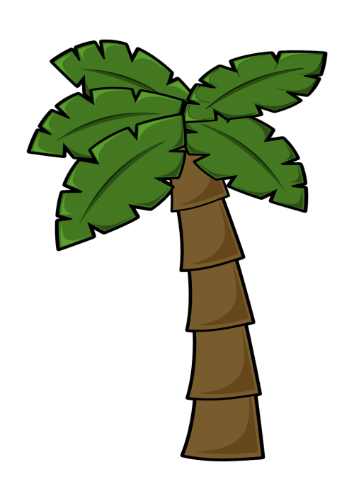 coconut tree jungle jungle leaf