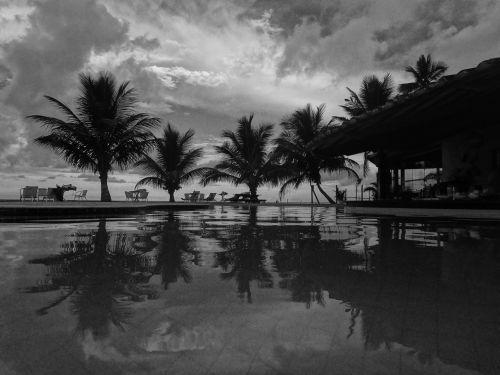 coconut tree holiday vocation