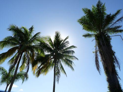kokoso medžiai,prieplauka,Itagua,ubatuba,San Paulas Brazilija pakrantė,kraštovaizdis,dangus,Royalty Free