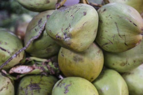 coconuts bunch fruit