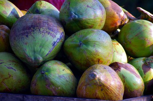coconuts drupe cocos nucifera