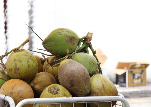 kokosai,tropikai,gerti