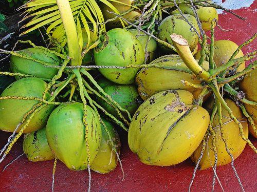 cocos fruit green bouquet coconuts