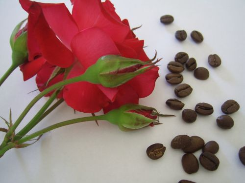 Coffe Beans And Red Roses