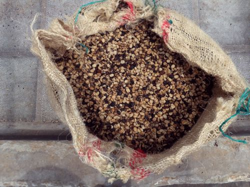 coffee beans finka