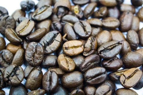 coffee the seed beverage