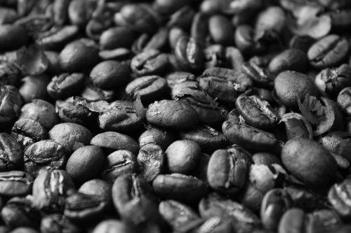 kava,pupos,skrudinta