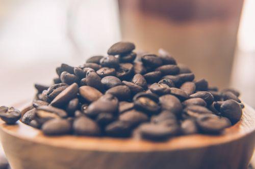 kava,pupos,sėklos